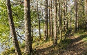 Idyllegarten-Route, © Tourismusverband Ostallgäu, @Peter von Felbert